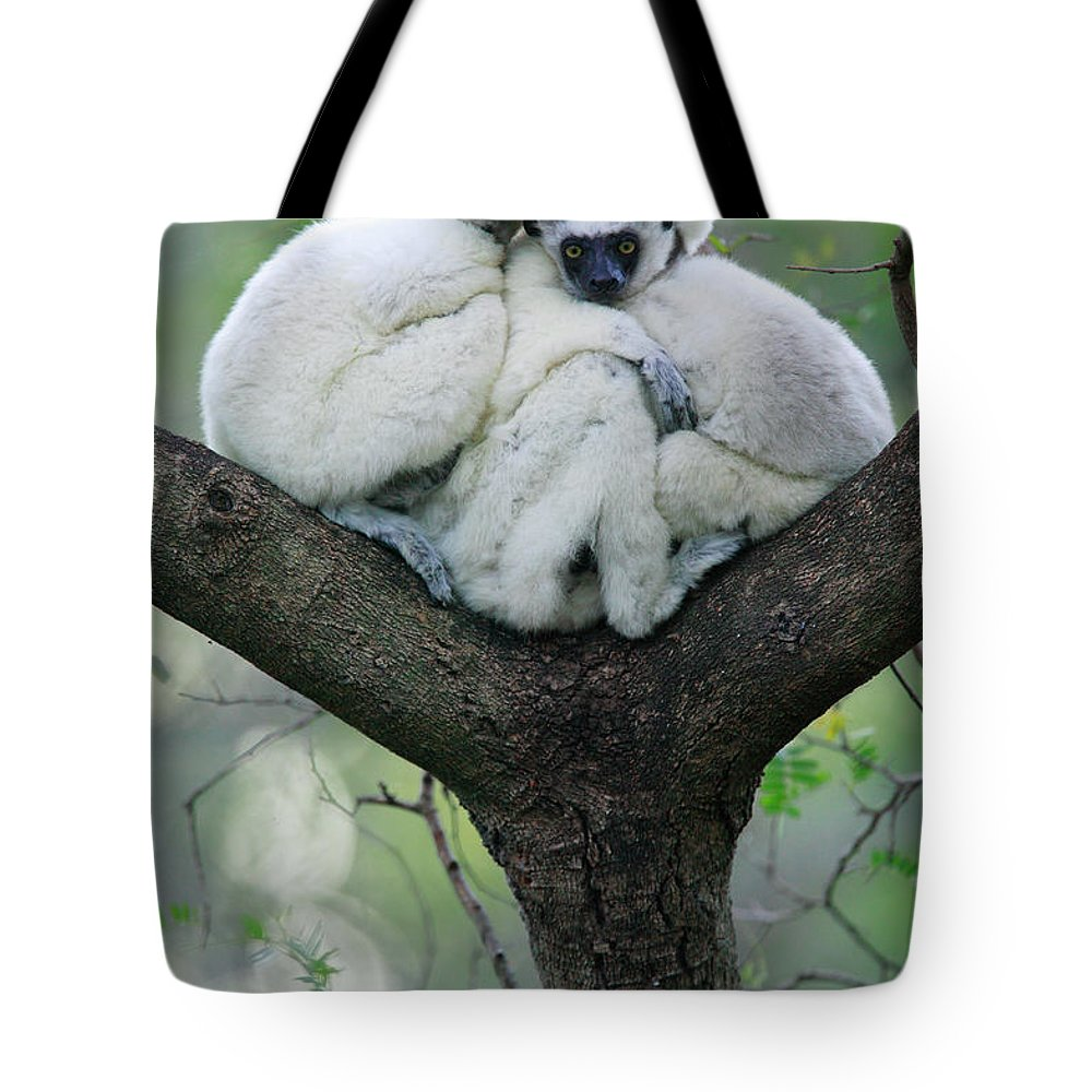 Jh Tote Bag featuring the photograph Verreauxs Sifaka Propithecus Verreauxi by Cyril Ruoso
