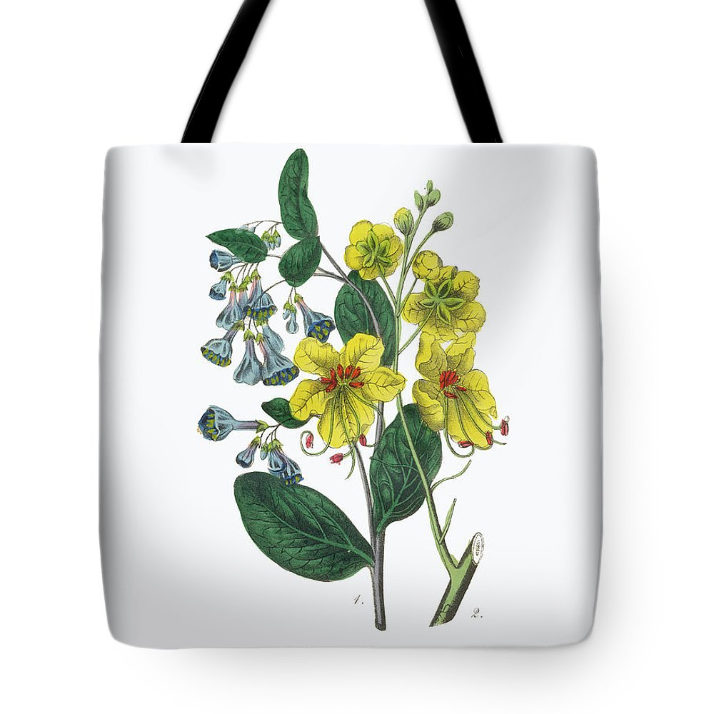 White Background Tote Bag featuring the digital art Victorian Botanical Illustration Of by Bauhaus1000