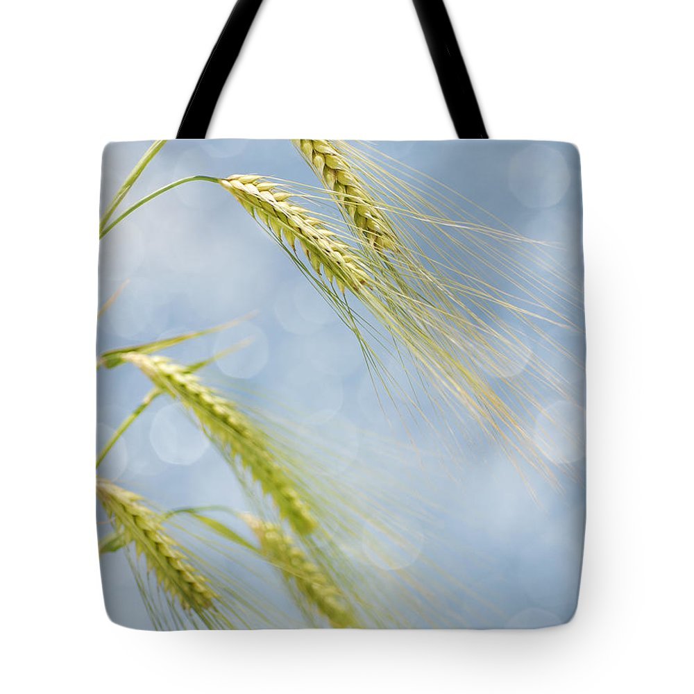 Wheat Tote Bag featuring the photograph Wheat by TouTouke A Y