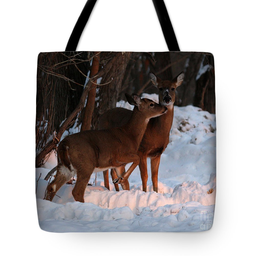 Deer Tote Bag featuring the photograph Whitetail Deer by Lori Tordsen