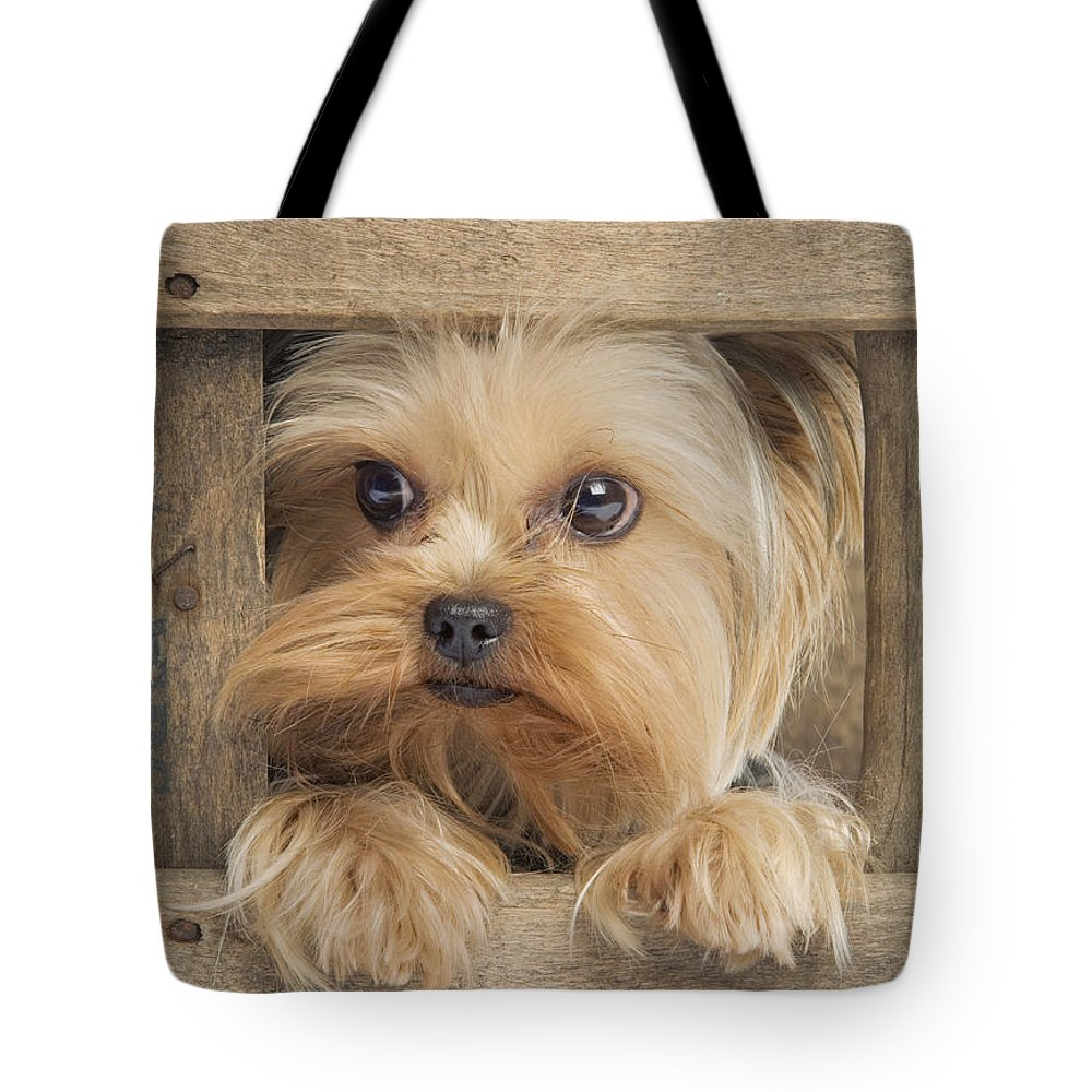 Yorkshire Terrier Tote Bag featuring the photograph Yorkshire Terrier Dog by Jean-Michel Labat