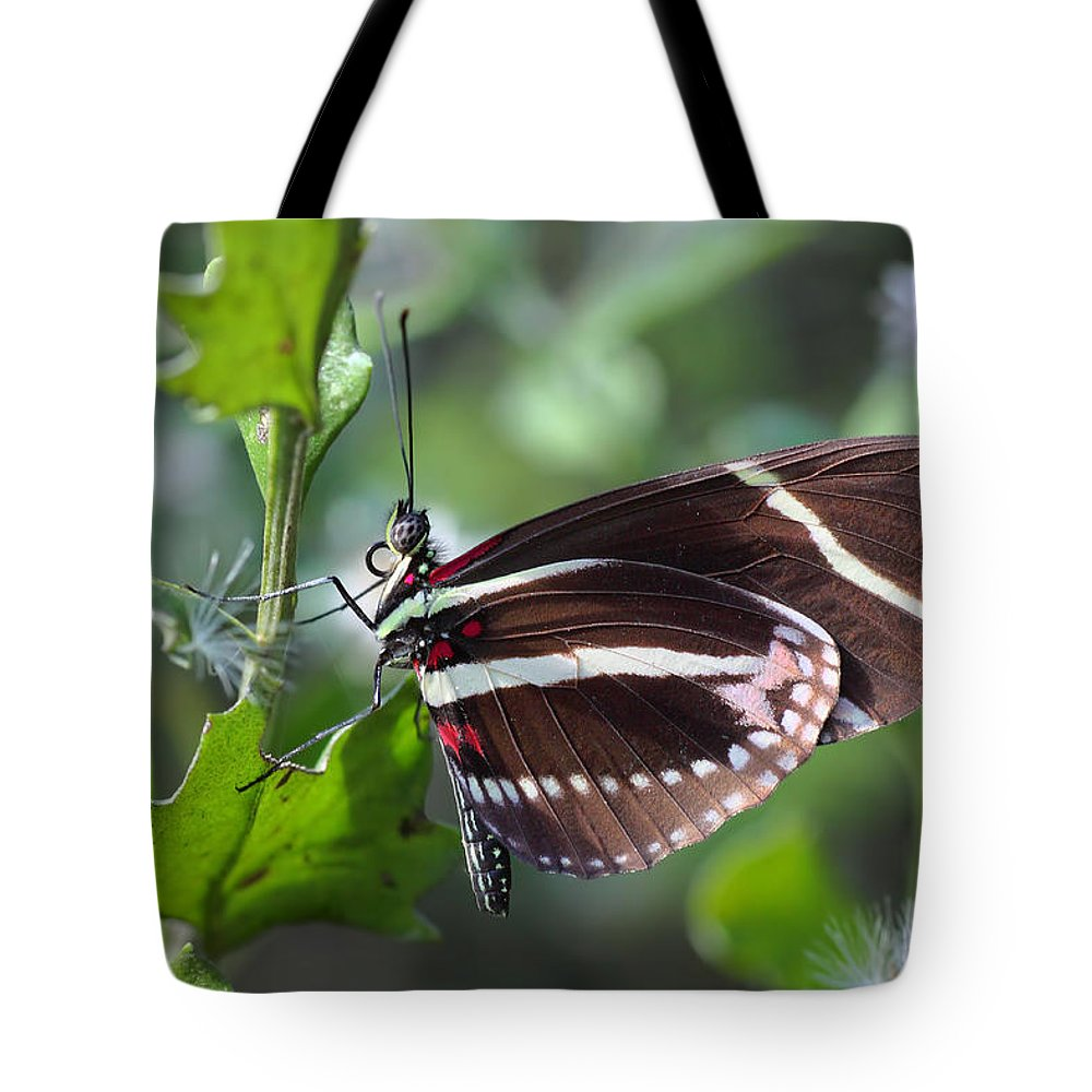 Antenna Tote Bag featuring the photograph Zebra Longwing Butterfly by Rudy Umans