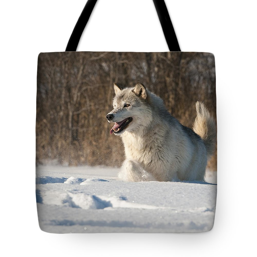 Canis Lupus Tote Bag featuring the photograph Wolf In Winter by John Shaw