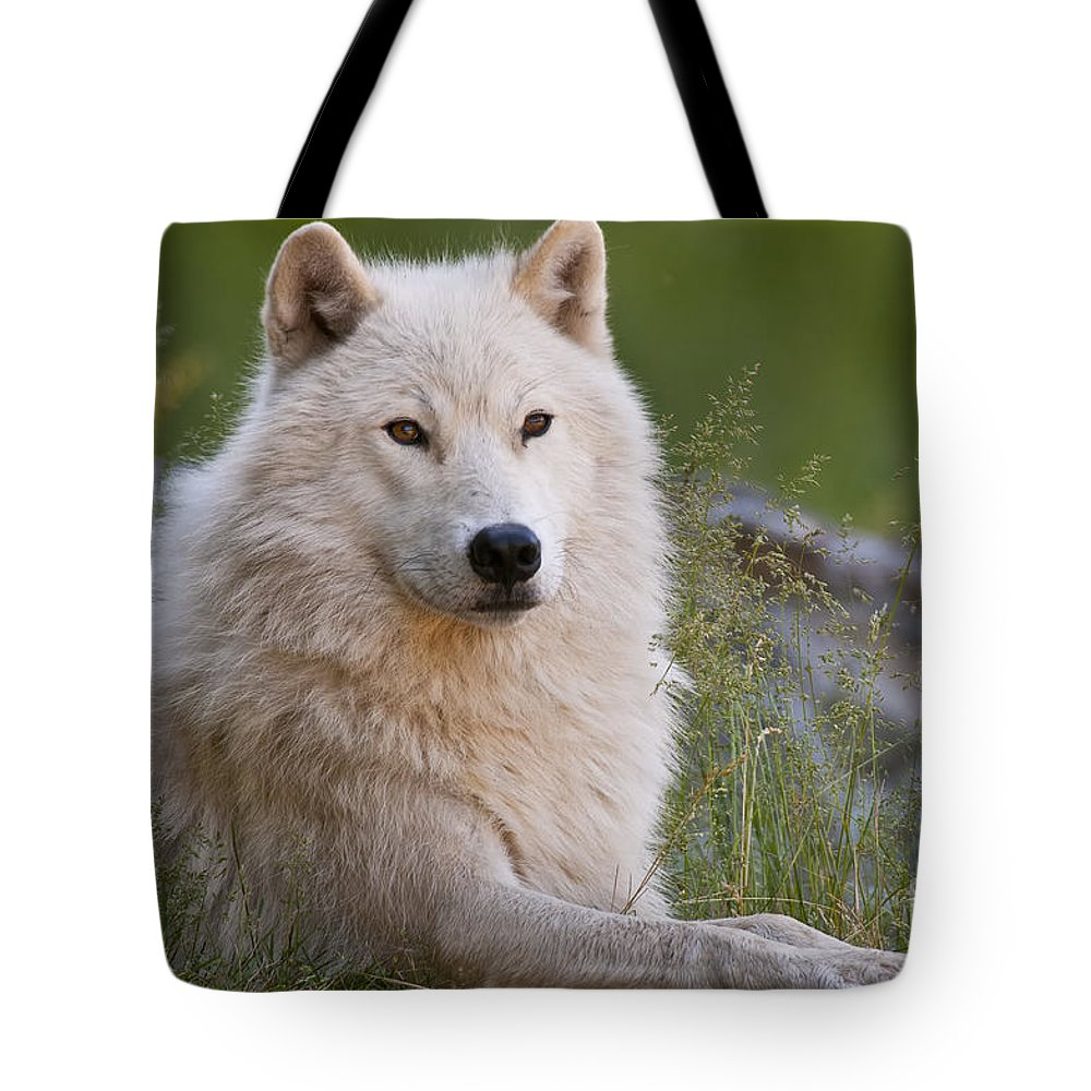 Arctic Wolf Photography Tote Bag featuring the photograph Arctic Wolf by Wolves Only