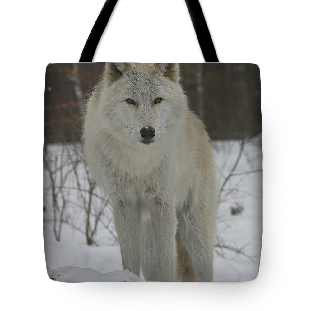 White Tote Bag featuring the photograph Arctic Wolf by Ken Keener