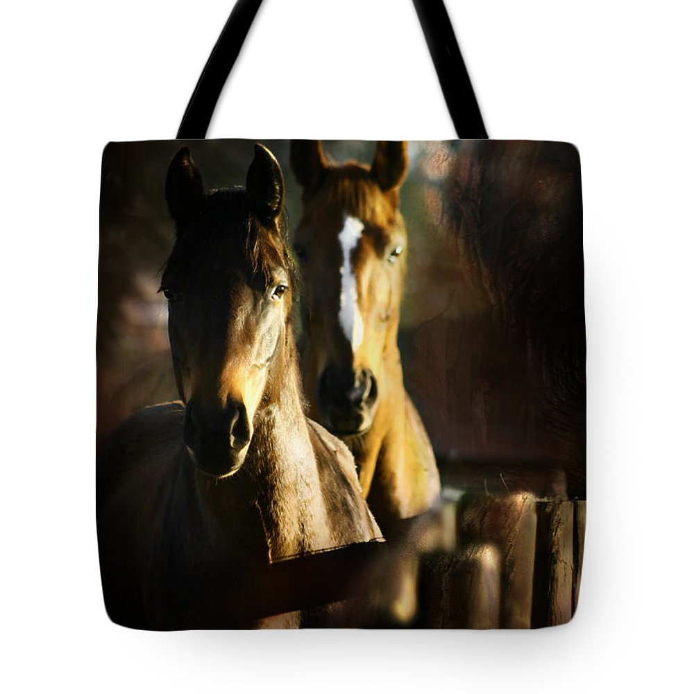 Horse Tote Bag featuring the photograph Autumn Colors by Angel Ciesniarska
