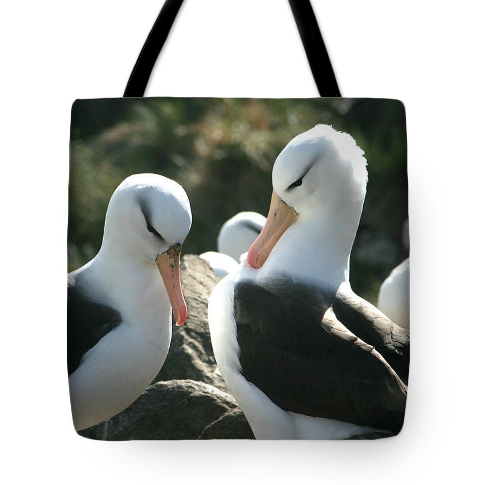 Nesting Albatross Tote Bag featuring the photograph Black Browed Albatross Pair by Amanda Stadther