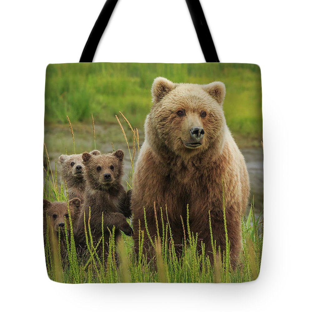 Brown Bear Tote Bag featuring the photograph Brown Bear Sow And Cubs, Lake Clark by Mint Images/ Art Wolfe
