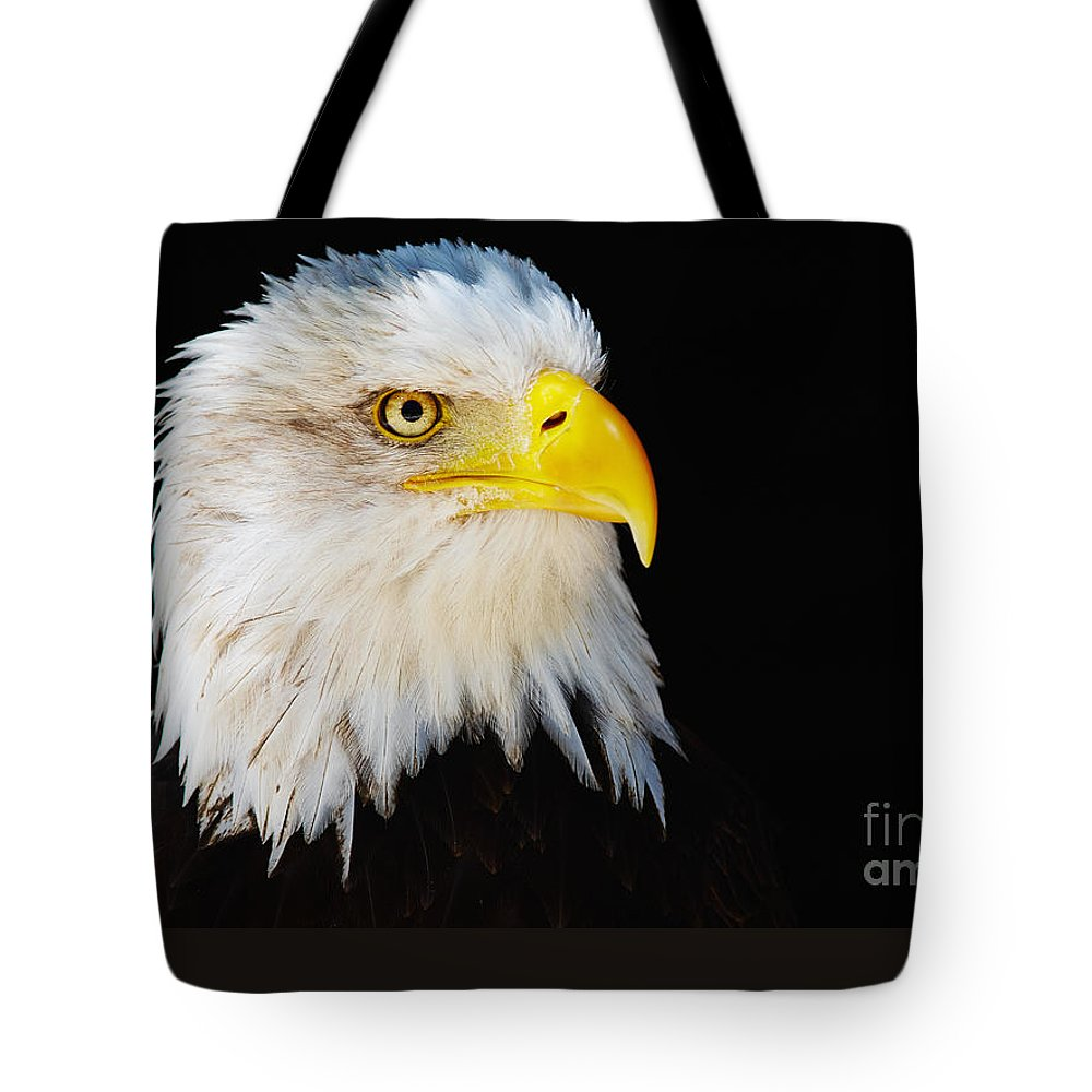 Alaska Tote Bag featuring the photograph Closeup Portrait Of An American Bald Eagle by Nick Biemans