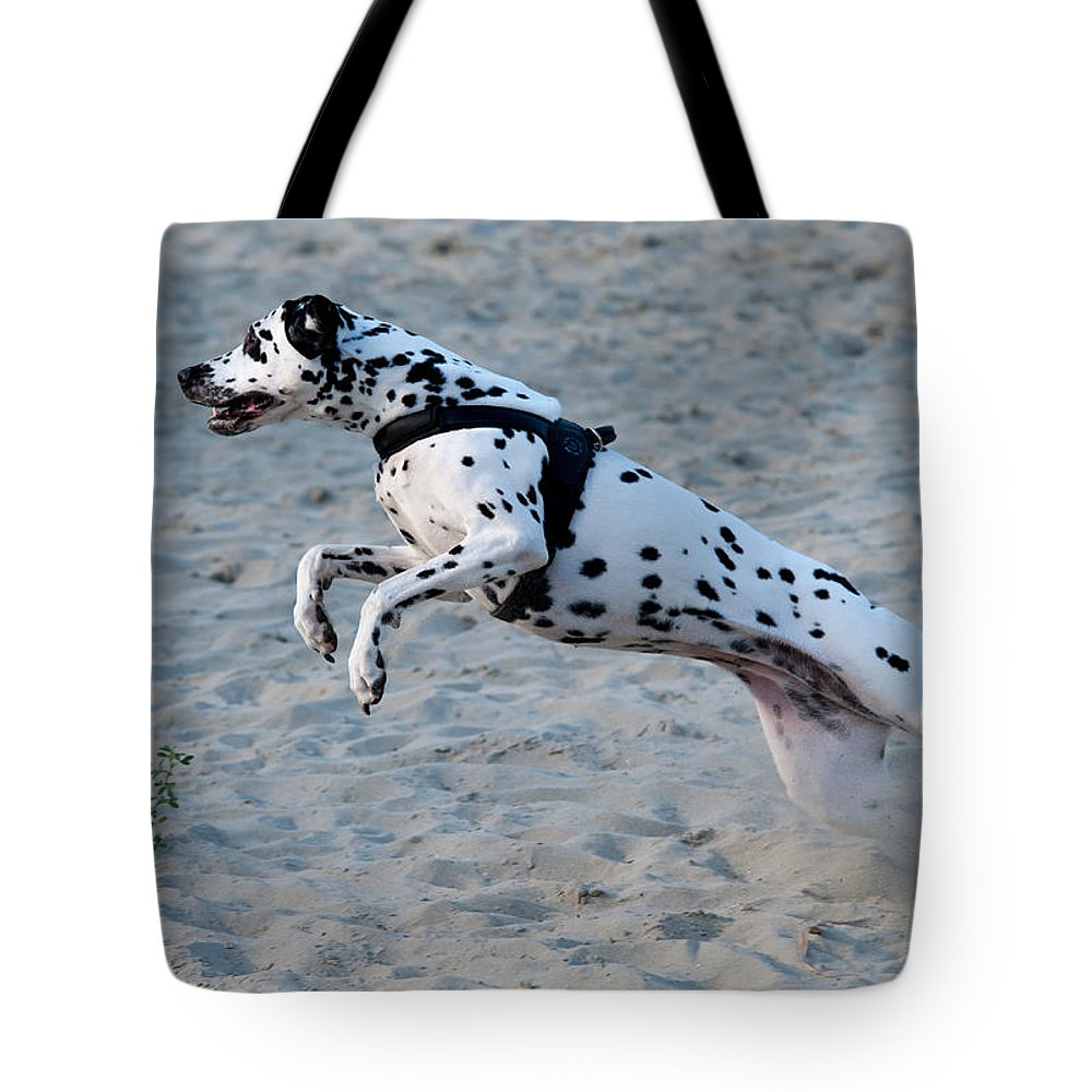 Dalmation Tote Bag featuring the photograph Dalmatian 3 by Martin FF