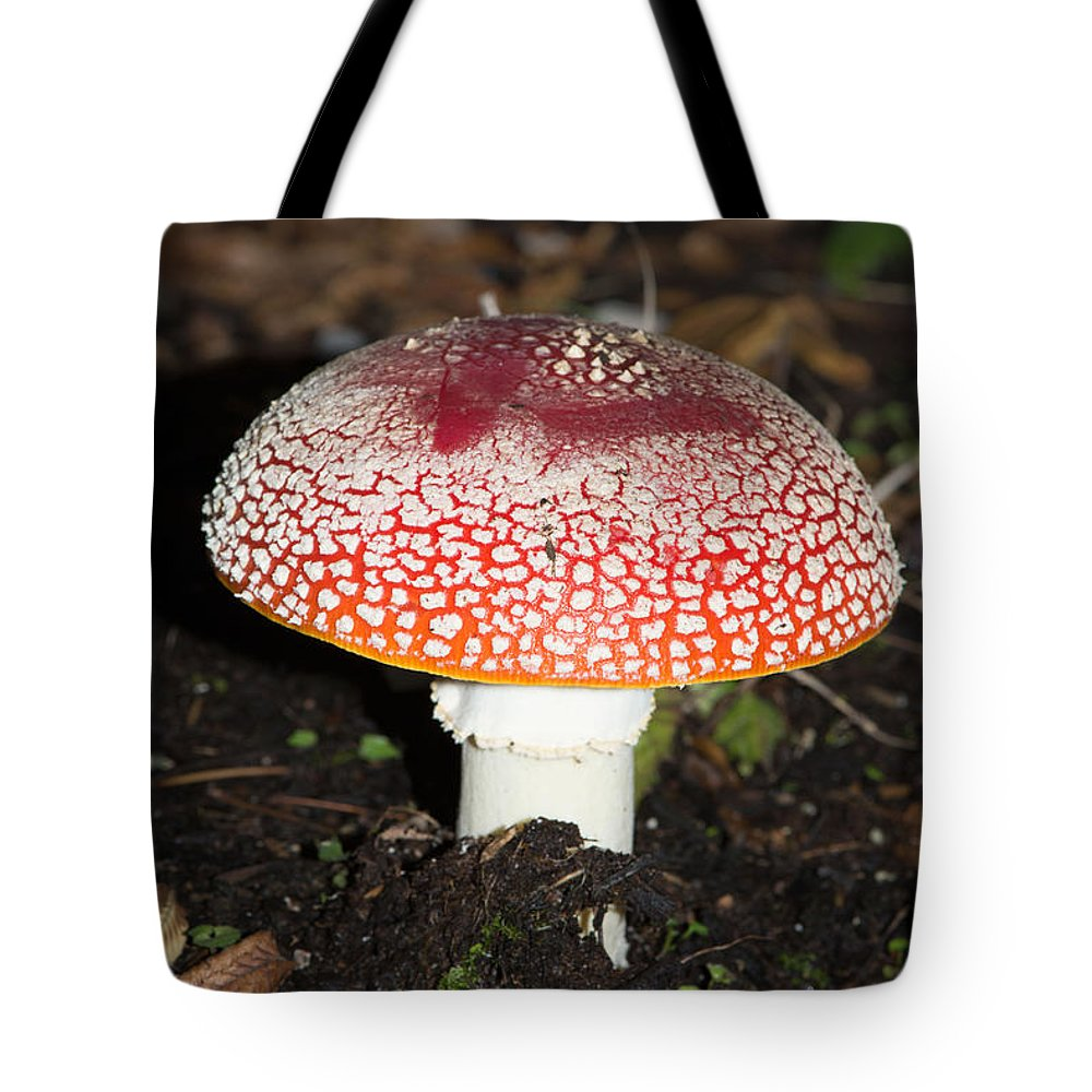 Amanita Muscaria Tote Bag featuring the digital art Fairy Mushrooms by Carol Ailles