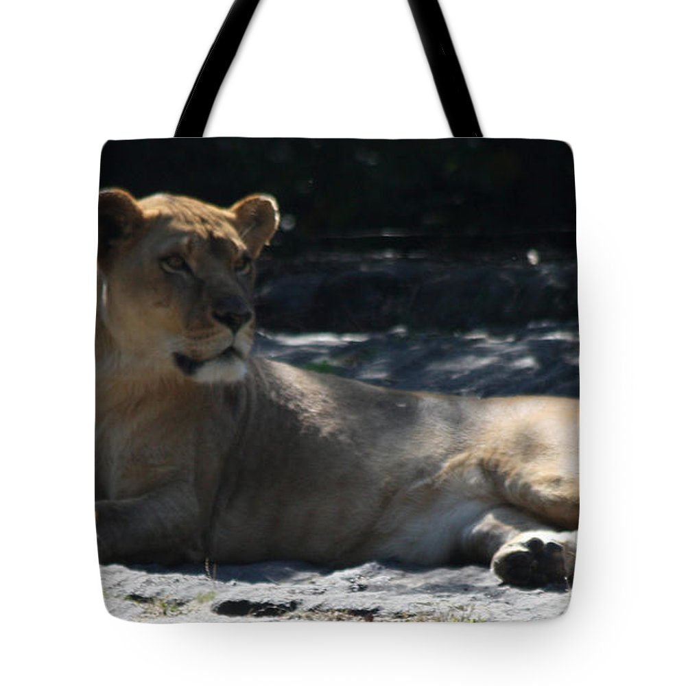 Female Lion Tote Bag featuring the photograph Female Lion by John Telfer