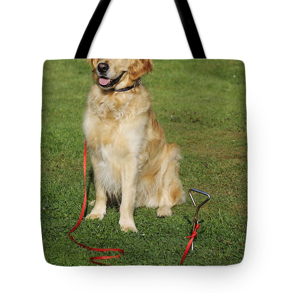Golden Retriever Tote Bag featuring the photograph Golden Retriever Dog by John Daniels