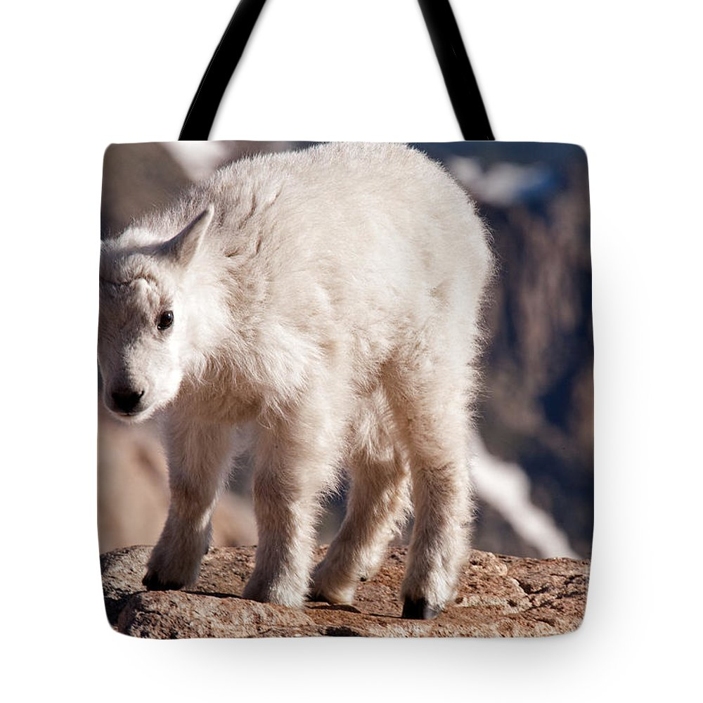 Arapaho National Forest Tote Bag featuring the photograph Mountain Goat Kid On Mount Evans by Fred Stearns