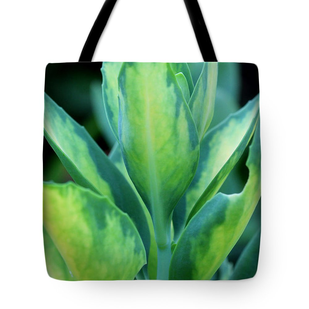 Green Tote Bag featuring the photograph Shades Of Spring by Jill Blackwood