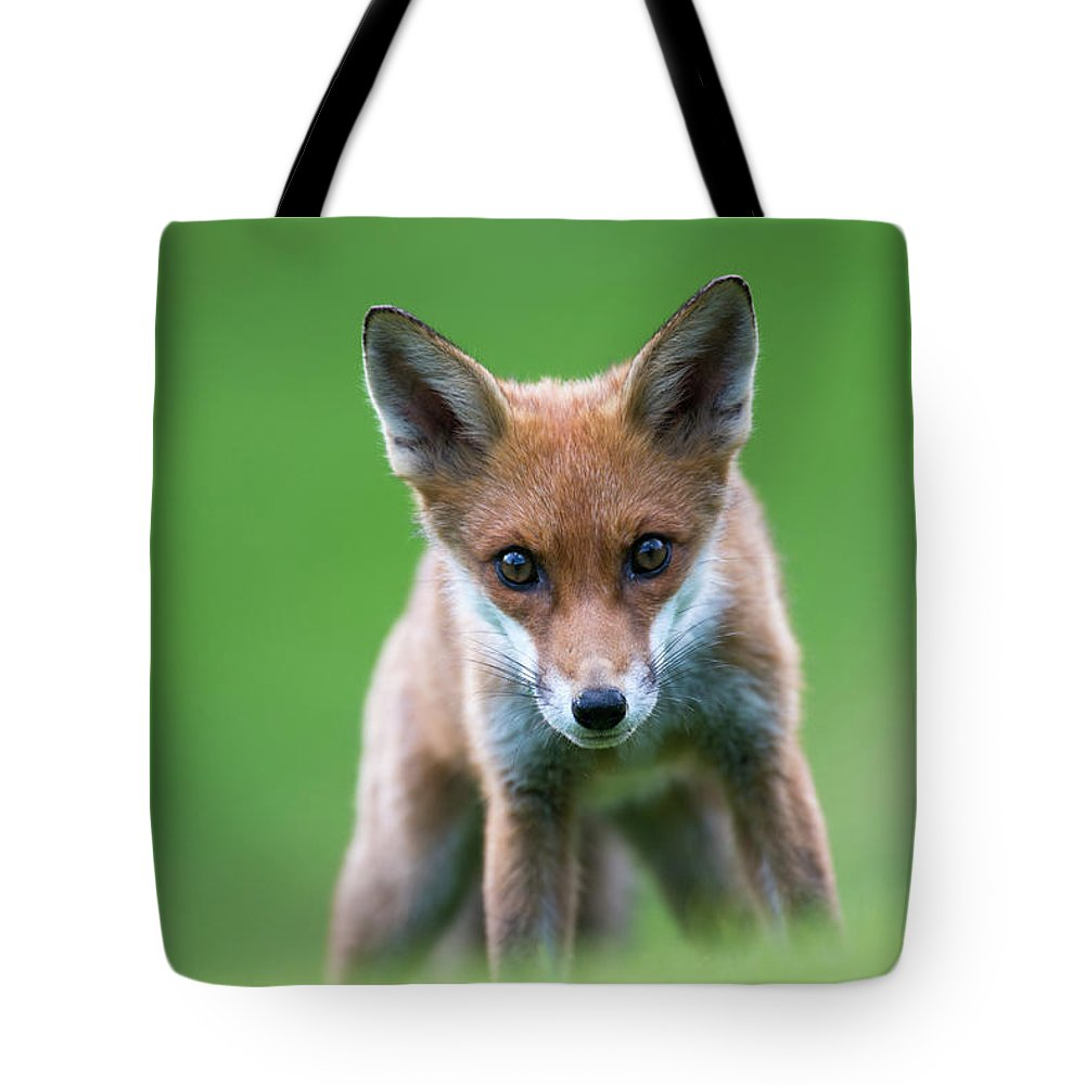 Conspiracy Tote Bag featuring the photograph Red Fox Cub Portrait by James Warwick