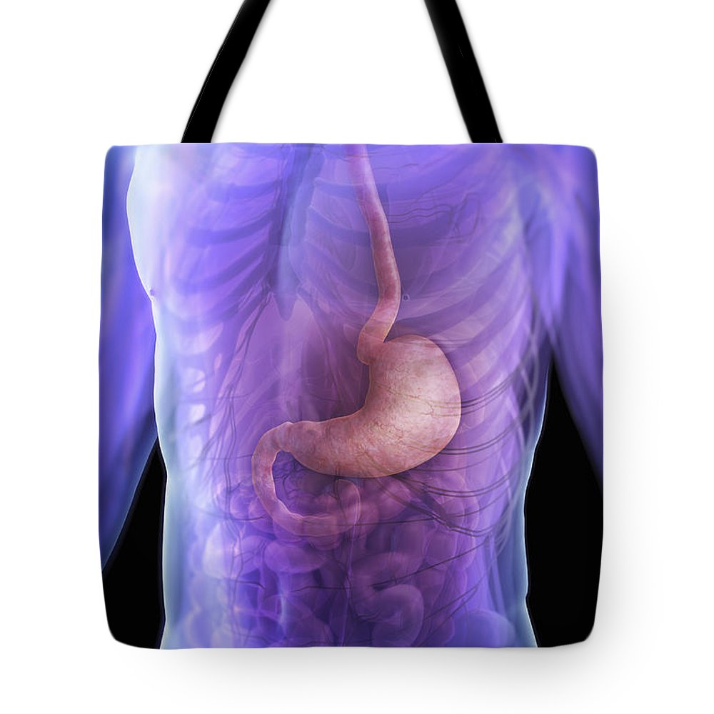 Transparent Tote Bag featuring the photograph The Stomach by Science Picture Co