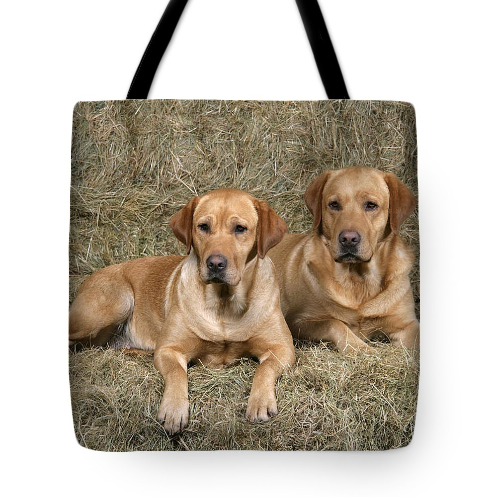 Dogs Tote Bag featuring the photograph Yellow Labrador Retrievers by John Daniels