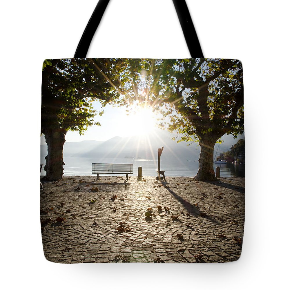 Bench Tote Bag featuring the photograph Bench And Trees by Mats Silvan