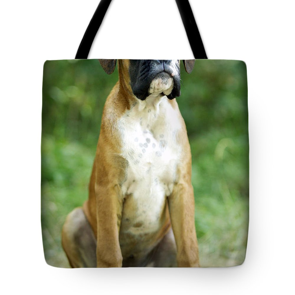 Boxer Tote Bag featuring the photograph Boxer Dog by Jean-Michel Labat