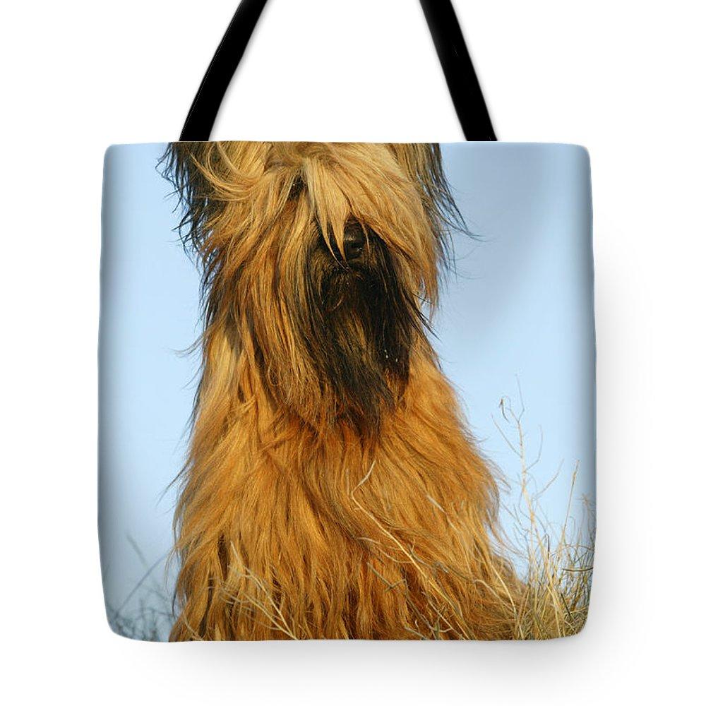 Briard Tote Bag featuring the photograph Briard Dog by Jean-Michel Labat