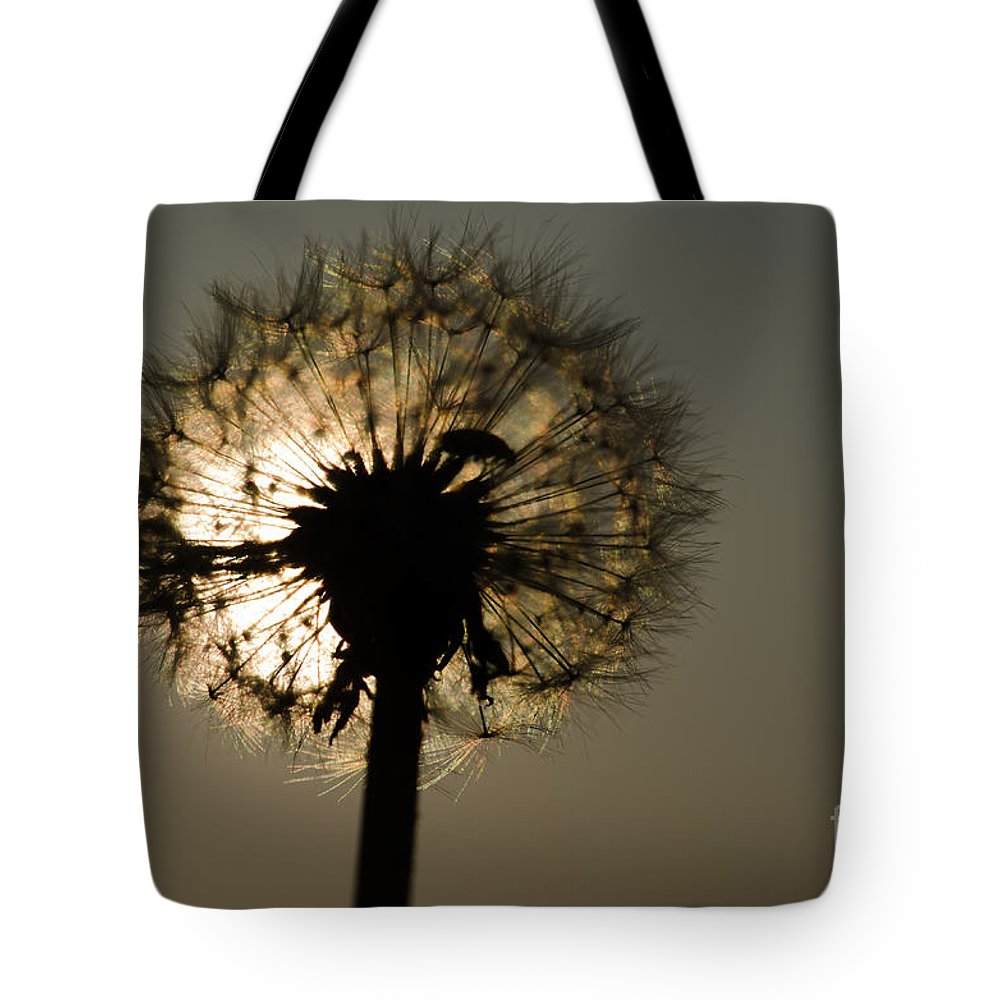 Dandelion Tote Bag featuring the photograph Dandelion by Mats Silvan
