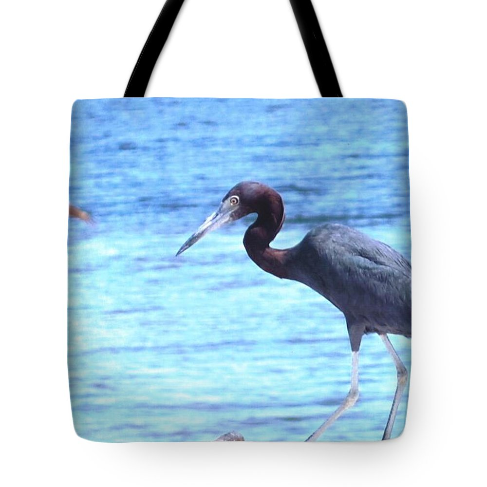 Feeding On The Shoreline Tote Bag featuring the photograph Egret by Robert Floyd