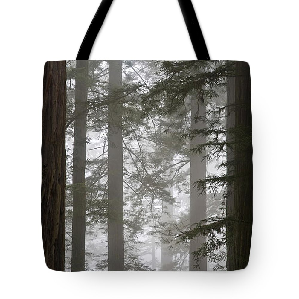 Plant Tote Bag featuring the photograph Foggy Coast Redwood Forest by Gregory G. Dimijian, M.D.
