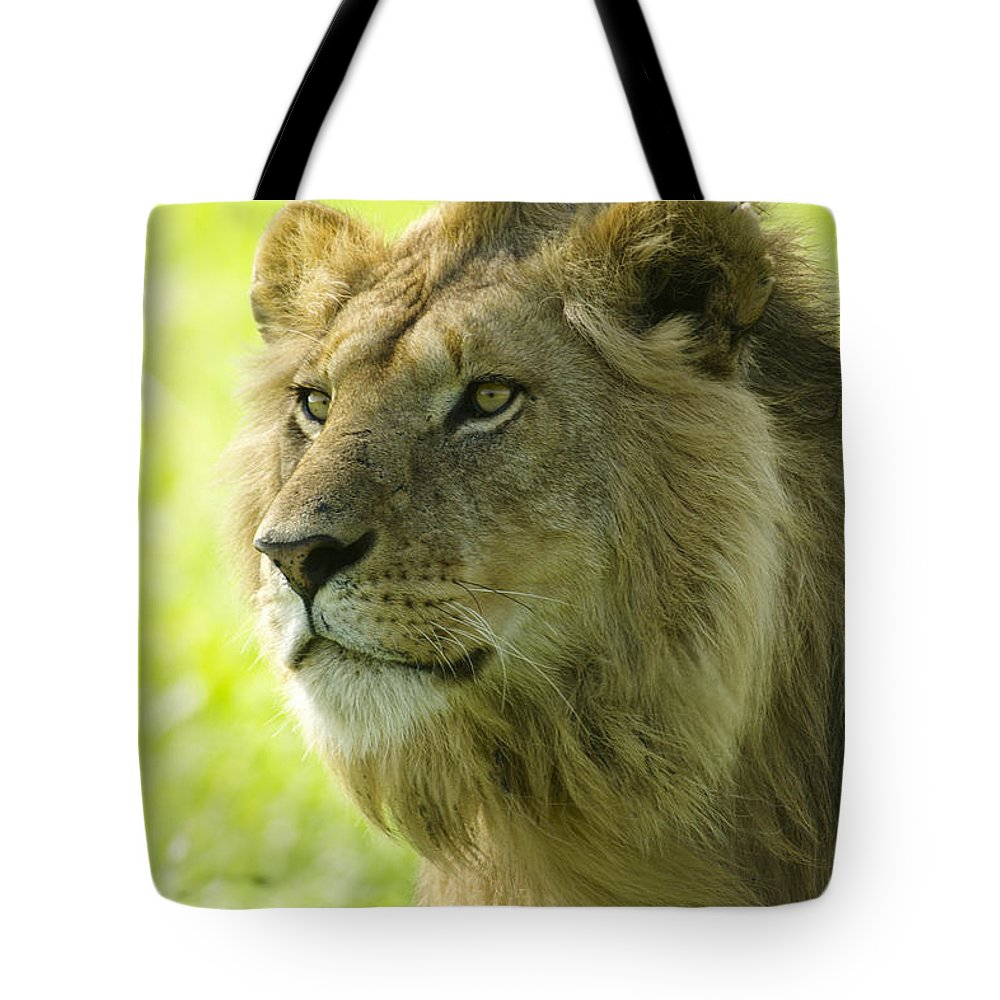Lion Tote Bag featuring the photograph Golden Boy by Michele Burgess