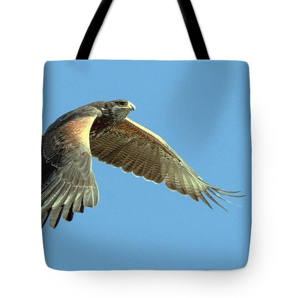 Harris Hawk Tote Bag featuring the photograph Harris Hawk by Tam Ryan