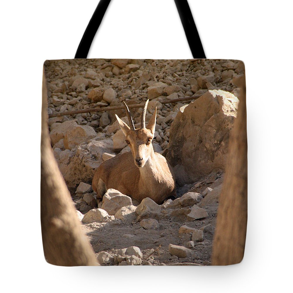 Nubian Ibex Tote Bag featuring the photograph Nubian Ibex by Doc Braham