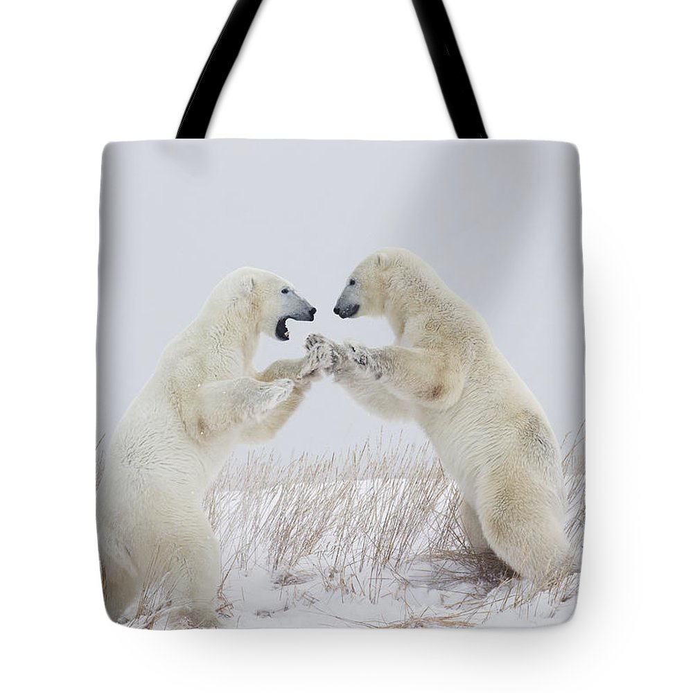 Arctic Tote Bag featuring the photograph Polar Bears Play Fighting Along The by Robert Postma