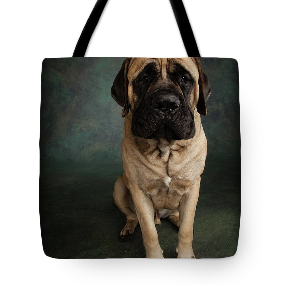 Photography Tote Bag featuring the photograph Portrait Of A Mastiff by Animal Images