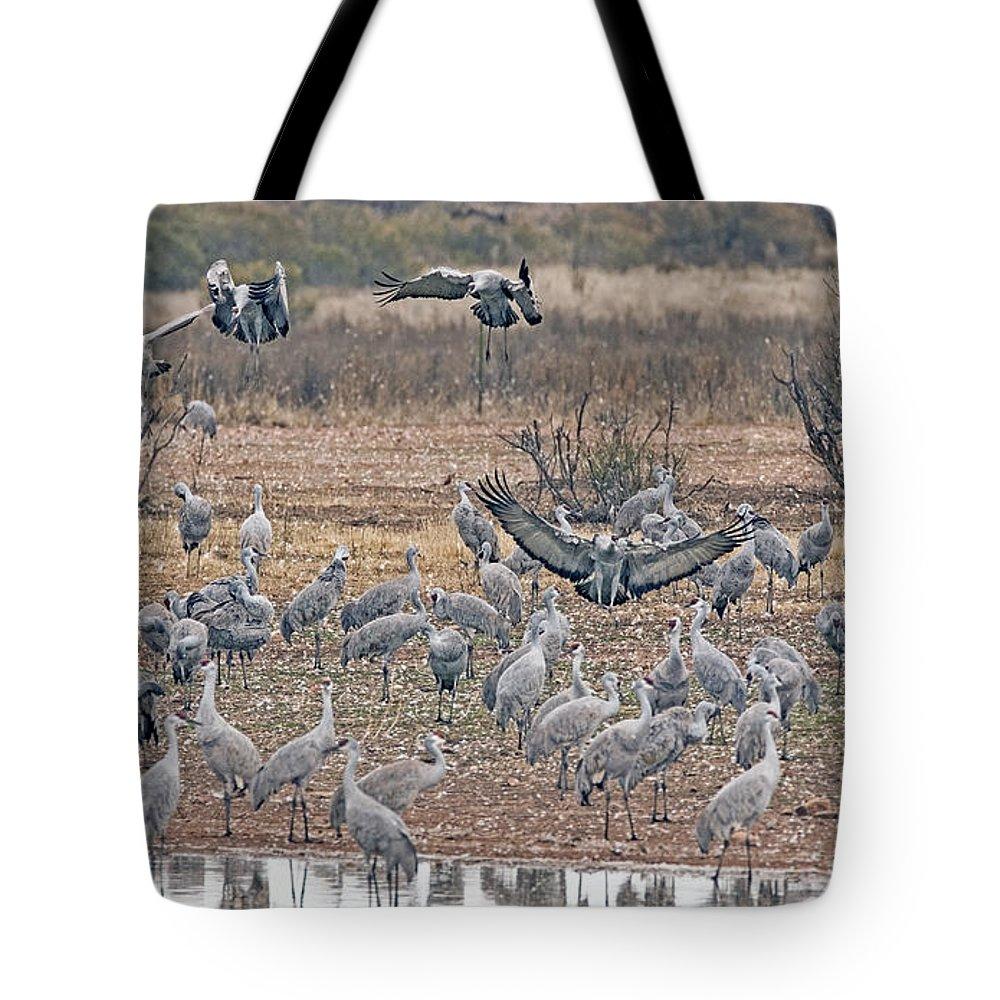 Sandhill Cranes Tote Bag featuring the photograph Sandhill Cranes by Tam Ryan