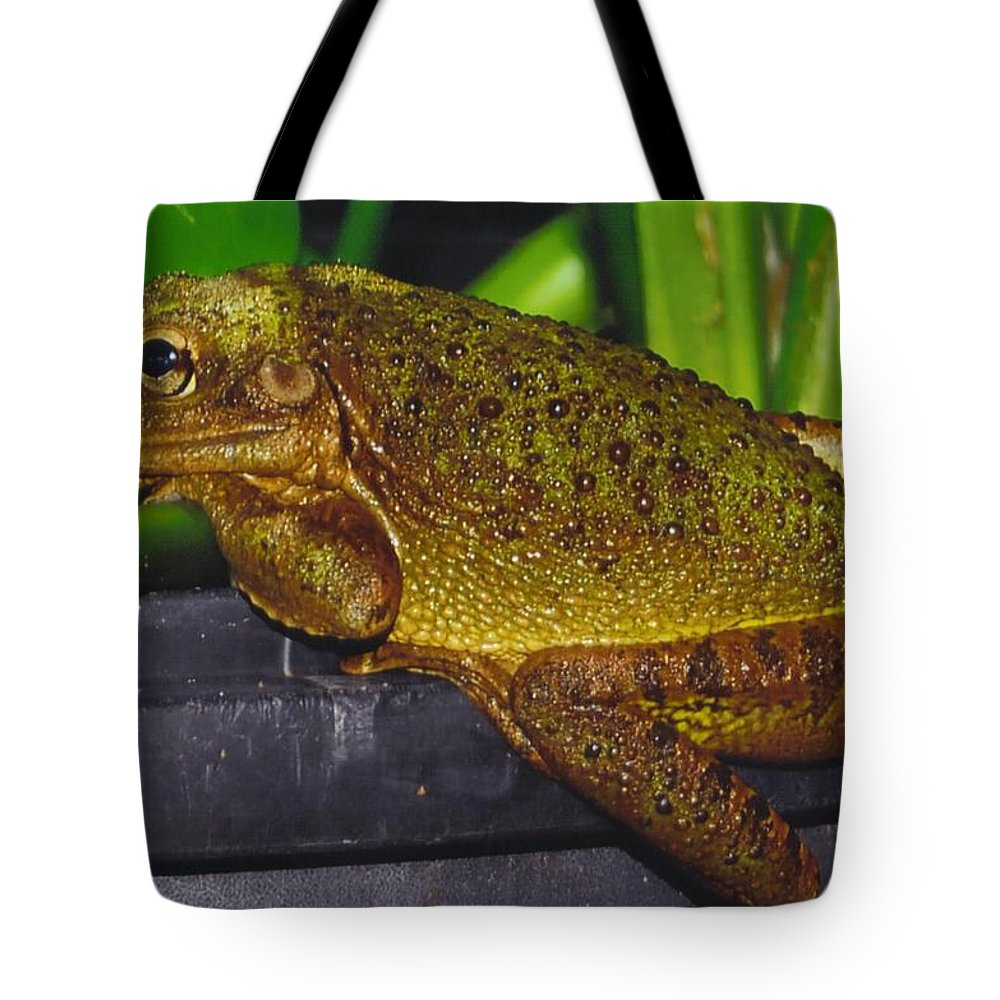 I'm Bored Tote Bag featuring the photograph Treefrog by Robert Floyd
