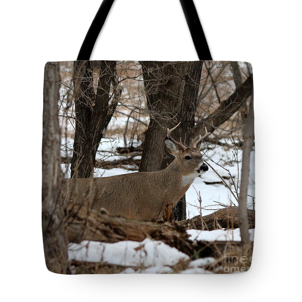 Deer Tote Bag featuring the photograph Whitetail Buck by Lori Tordsen