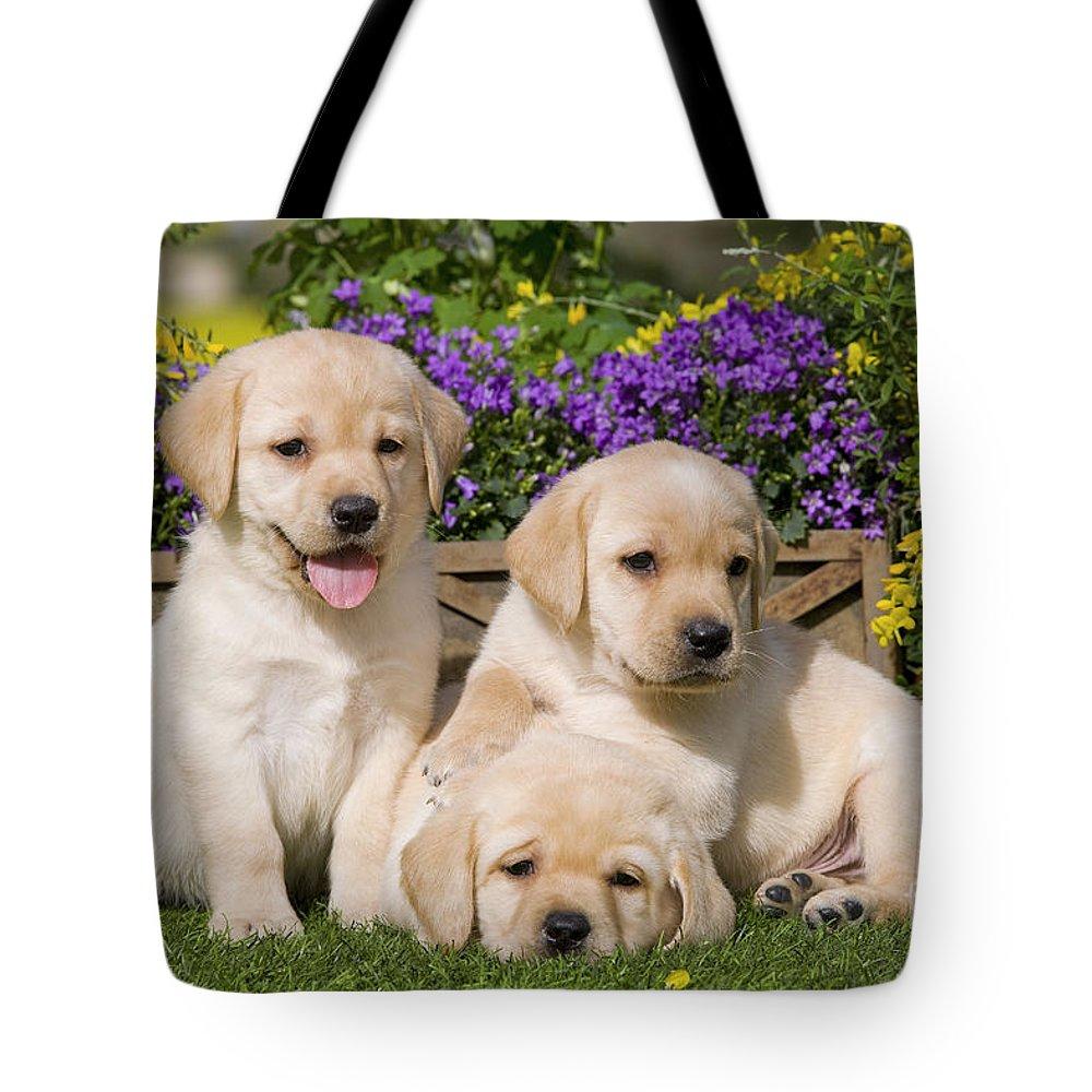 Labrador Retriever Tote Bag featuring the photograph Yellow Labrador Puppies by Jean-Michel Labat