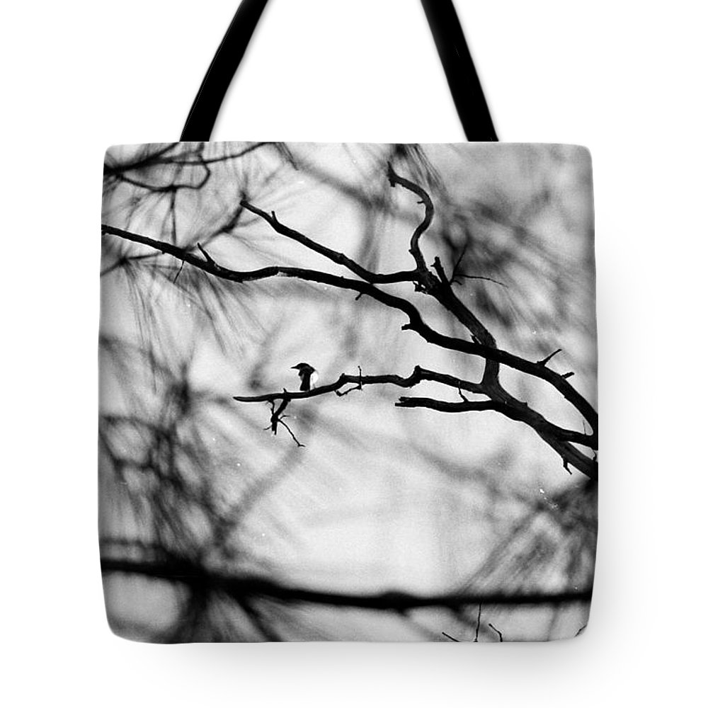 Birds Tote Bag featuring the photograph Bird In Tree by Karl Rose