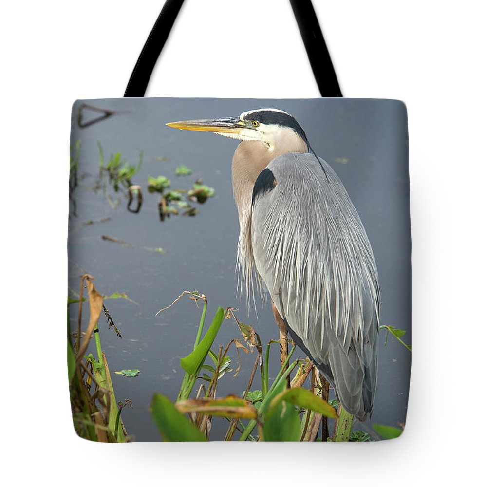 Standing Water Tote Bag featuring the photograph Great Blue Heron by Mark Newman