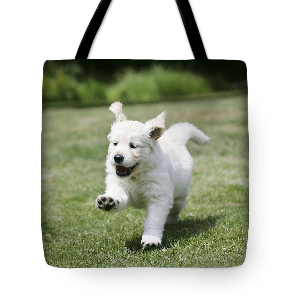 Golden Retriever Tote Bag featuring the photograph Golden Retriever Puppy by John Daniels