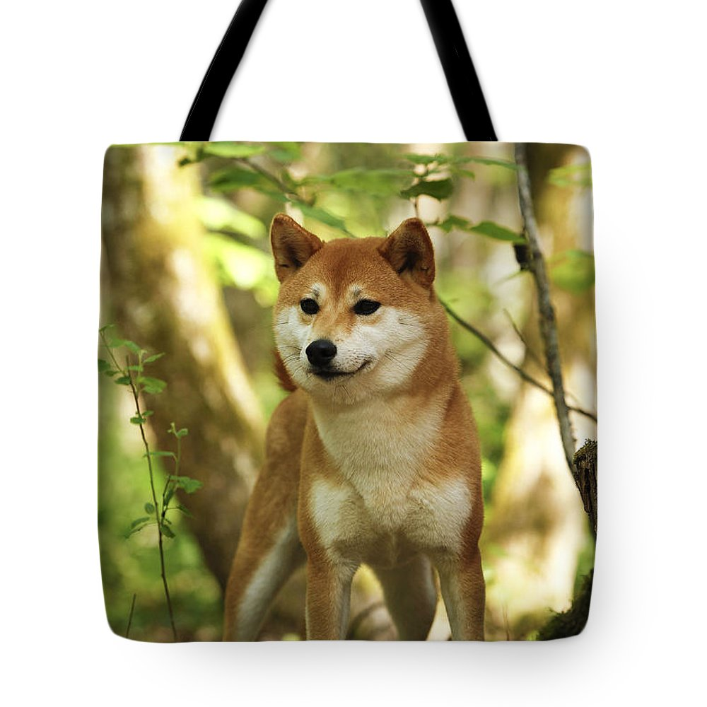 Shiba Inu Tote Bag featuring the photograph Shiba Inu Dog by Jean-Michel Labat
