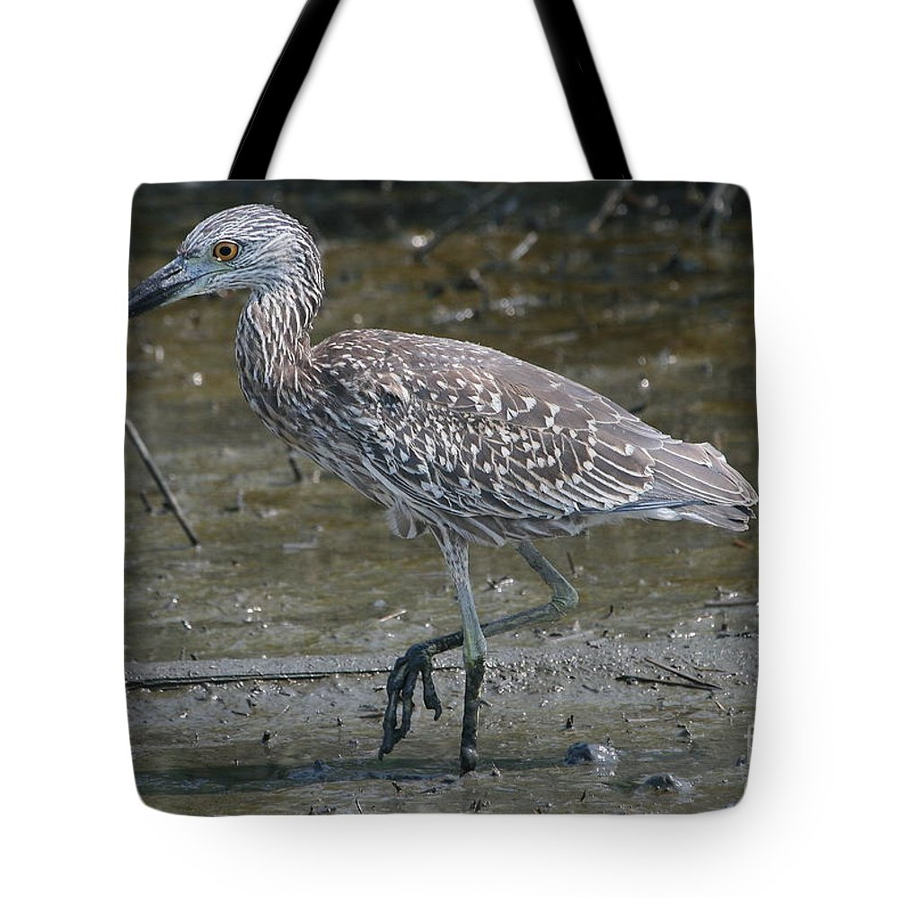 Juvenile Tote Bag featuring the photograph Yellow -crowned Night Heron by Ken Keener