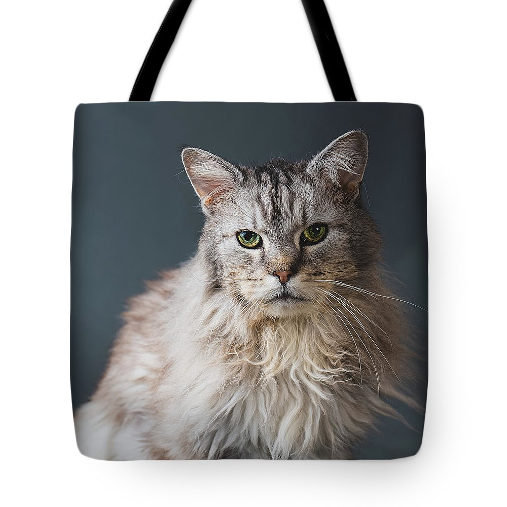 Pets Tote Bag featuring the photograph Fortunate Tails by Matt Porteous