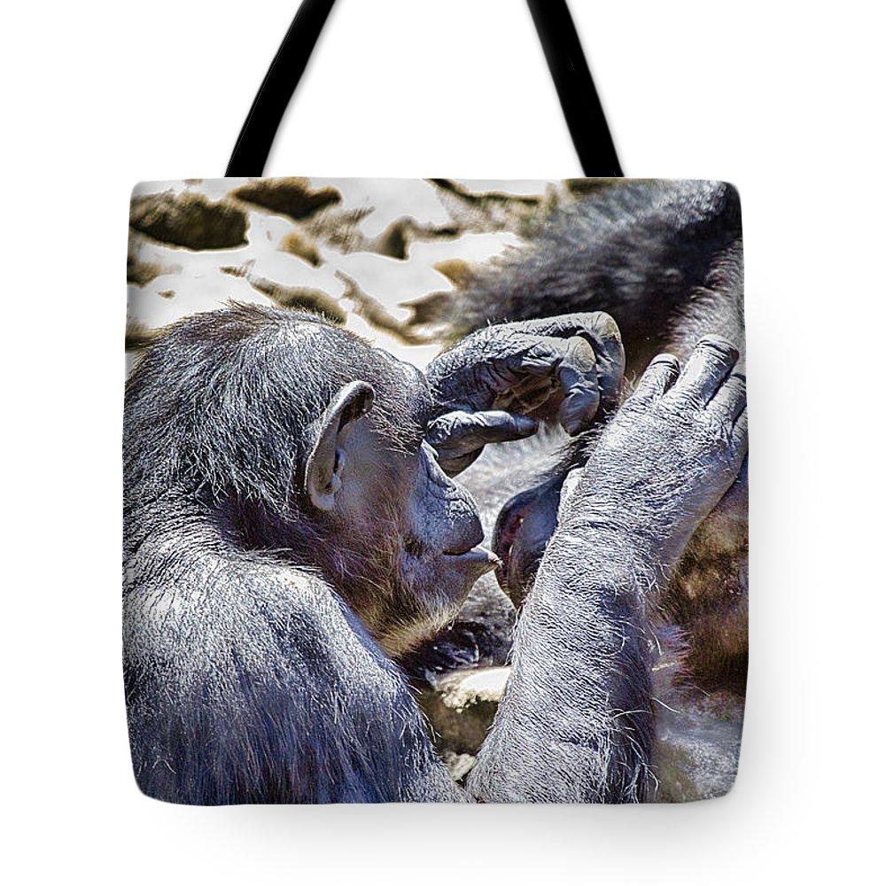 Chimpanzees Tote Bag featuring the photograph A Bit Like Us V4 by Douglas Barnard