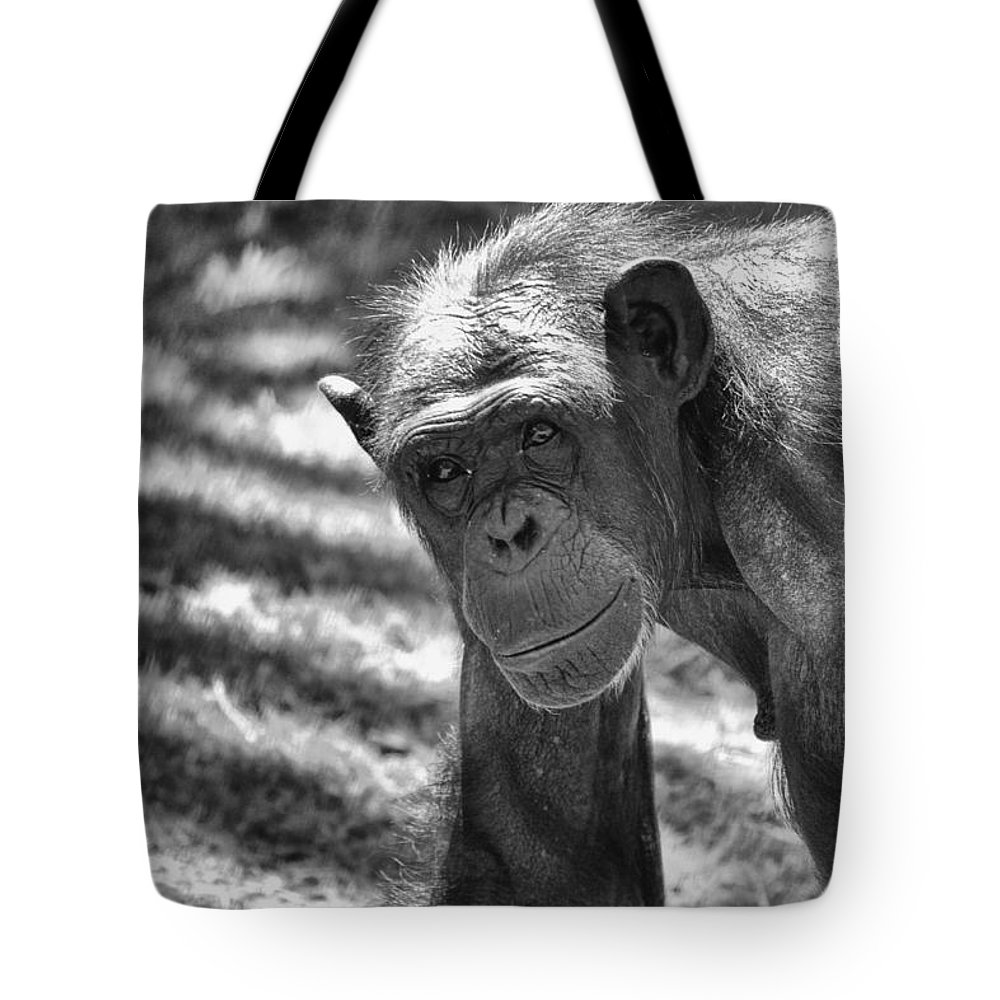Chimpanzees Tote Bag featuring the photograph A Bit Like Us V5 by Douglas Barnard