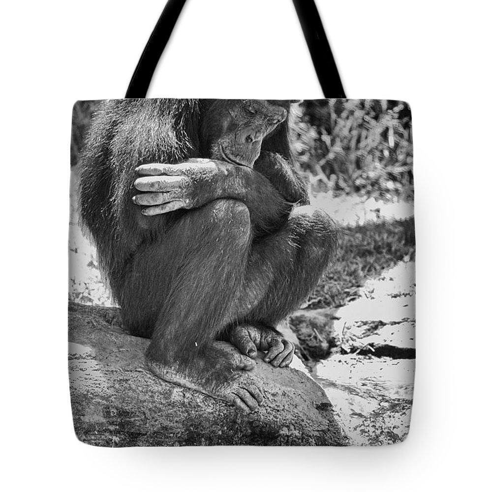 Chimpanzees Tote Bag featuring the photograph A Bit Like Us V6 by Douglas Barnard