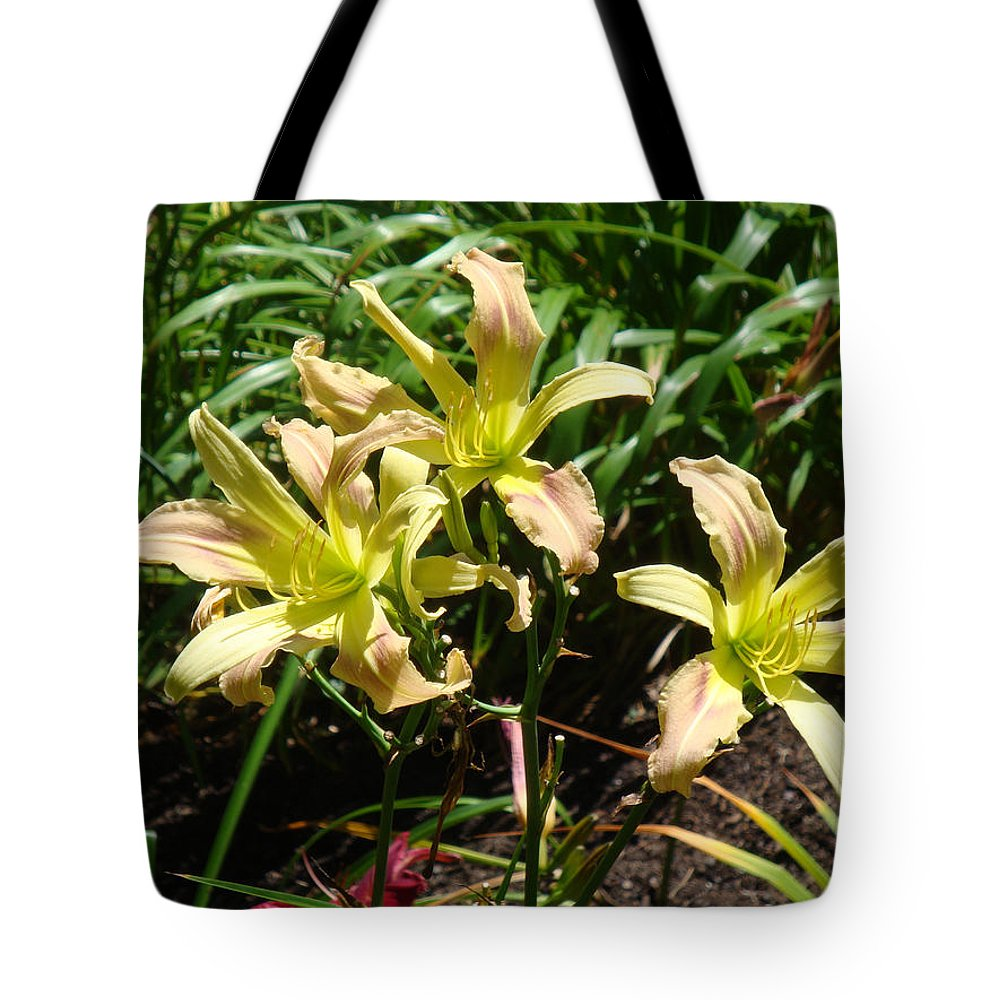 Daylily Tote Bag featuring the photograph A Blush of Summer by Jean Blackmer