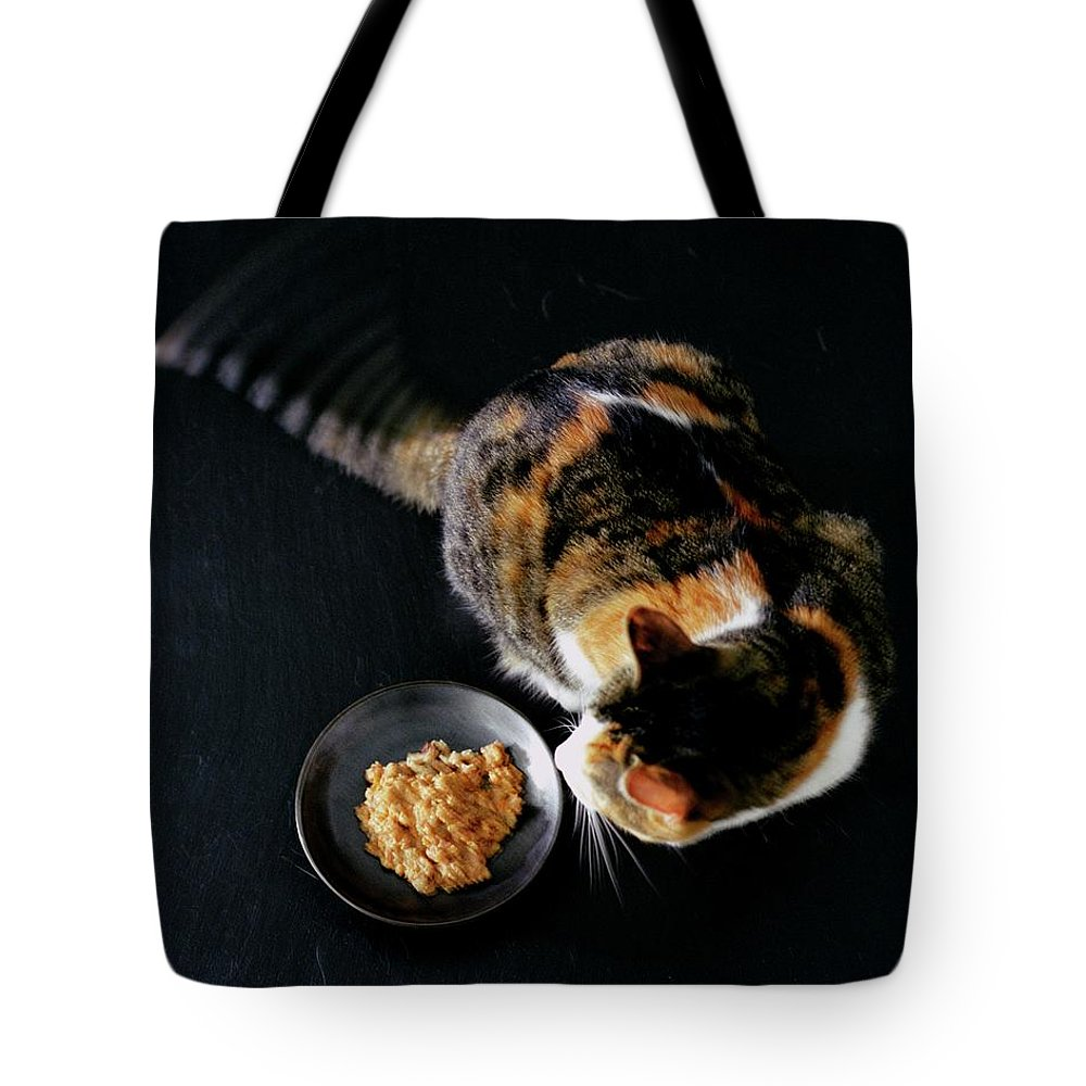 Cat Tote Bag featuring the photograph A Cat Beside A Dish Of Cat Food by Romulo Yanes