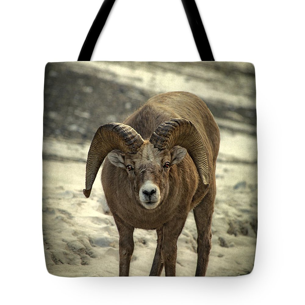Rocky Mountain Bighorn Sheep Lifestyle Products
