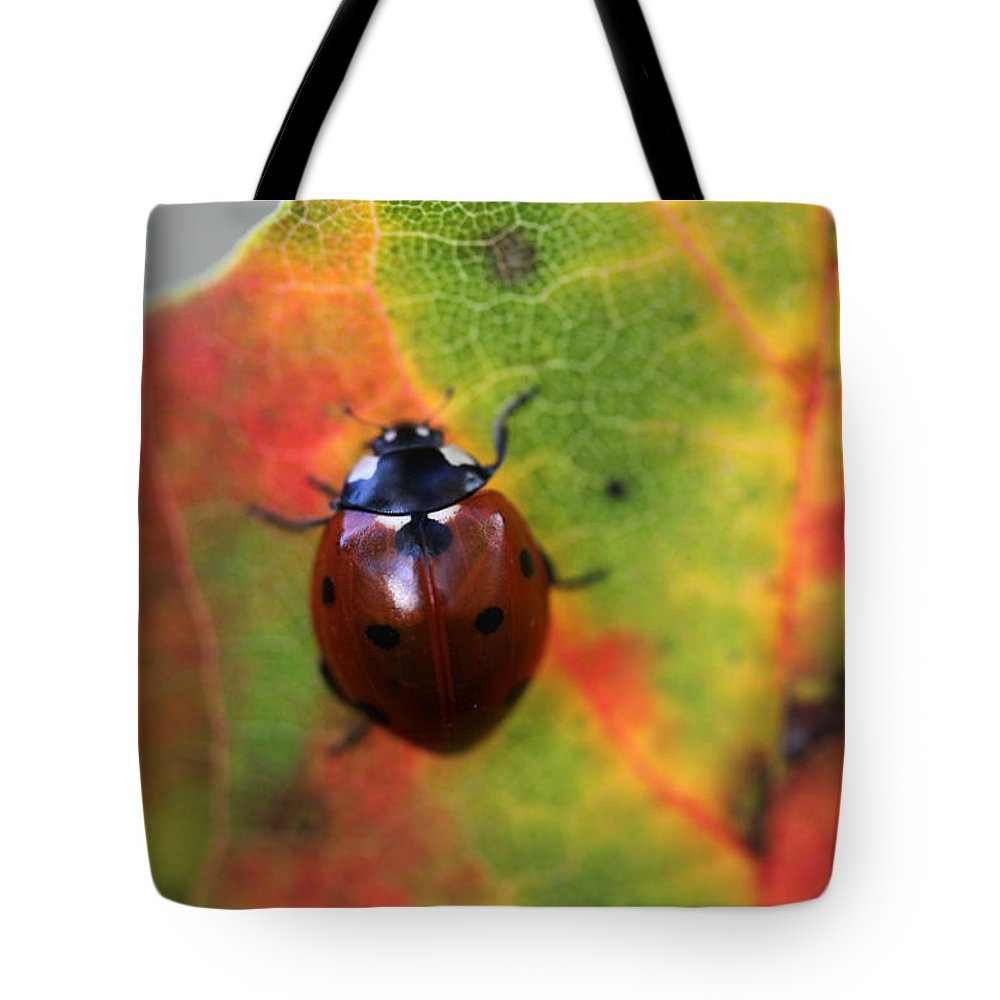 Ladybug Tote Bag featuring the photograph A Fall Walk 4 by Mary Bedy
